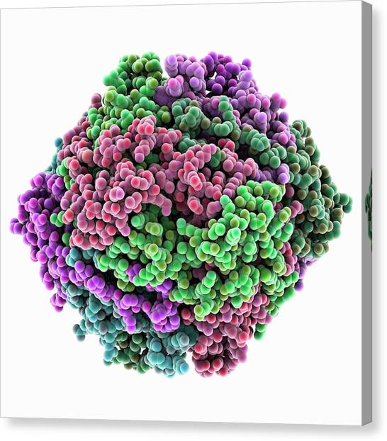 Biochemical Canvas Print - Manganese Catalase Enzyme Molecule by Laguna Design