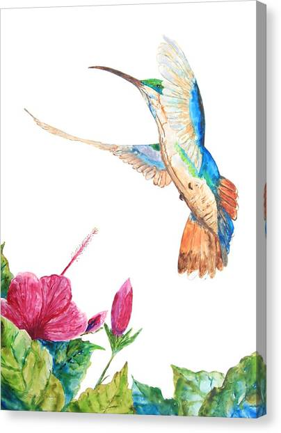 Mango Hummingbird Canvas Print