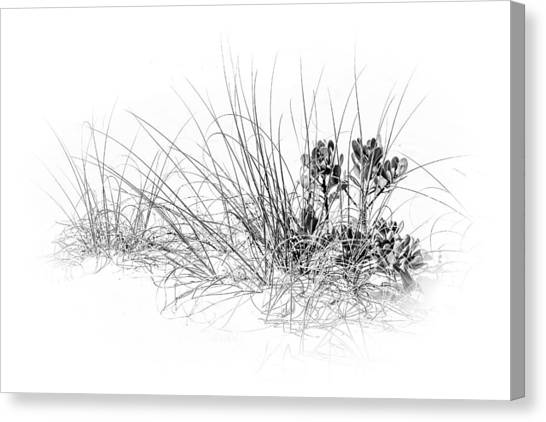 Mangrove Trees Canvas Print - Mangrove And Sea Oats-bw by Marvin Spates