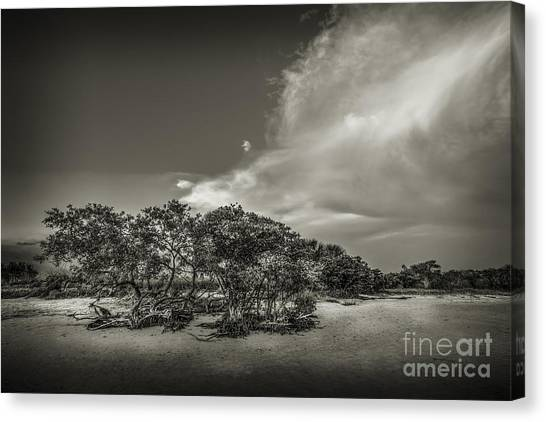 Low Tide Canvas Print - Mangrove At Low Tide by Marvin Spates