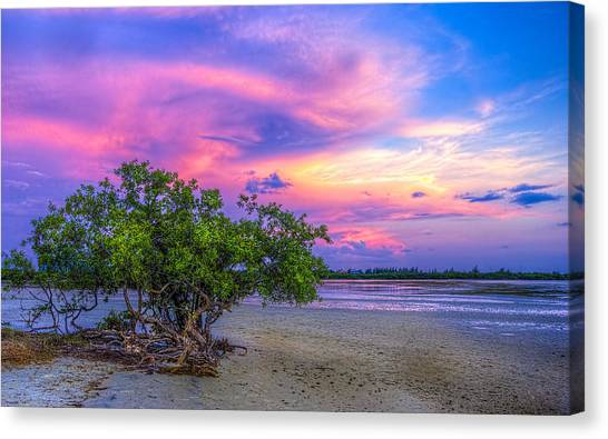 Low Tide Canvas Print - Mangrove By The Bay by Marvin Spates