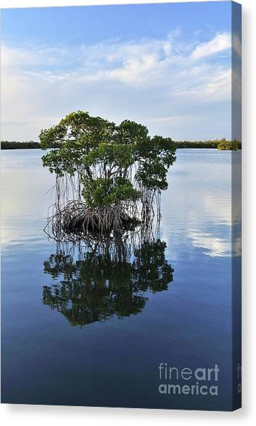 Mangrove Island Canvas Print by Andres LaBrada
