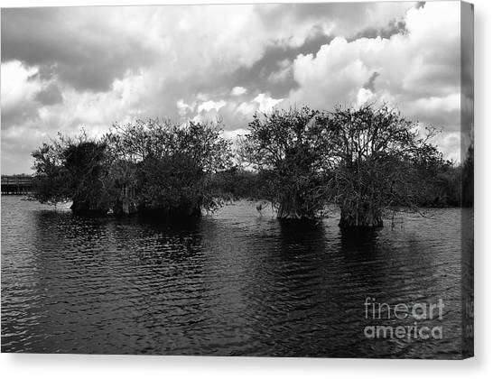 Mangrove Islands Canvas Print by Andres LaBrada