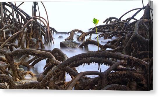Mangrove Trees Canvas Print - Mangrove Tree Roots Detail by Dirk Ercken