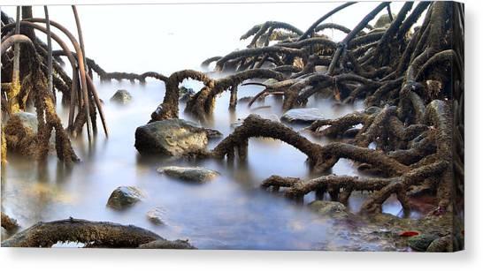 Mangrove Trees Canvas Print - Mangrove Tree Roots by Dirk Ercken