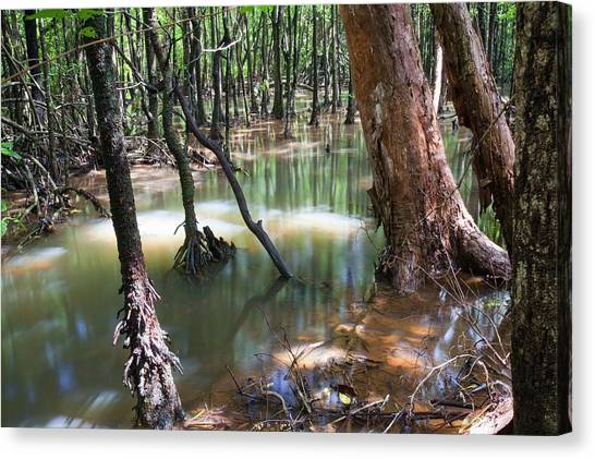 Daintree Rainforest Canvas Print - Mangrove Trees by Ashley Cooper
