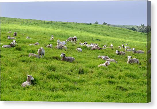 Image result for tranquil pastures of sheep