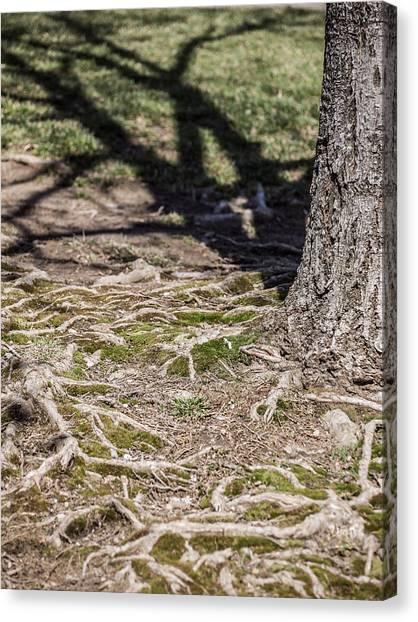 Maple Canvas Print by Carl Engman