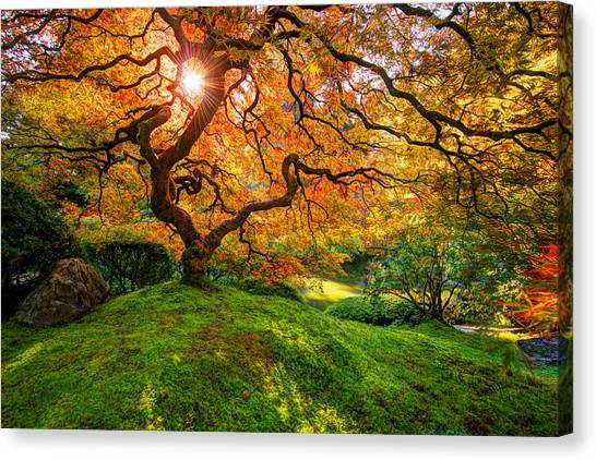 Japanese Garden Canvas Print - Maple  by Dustin  LeFevre