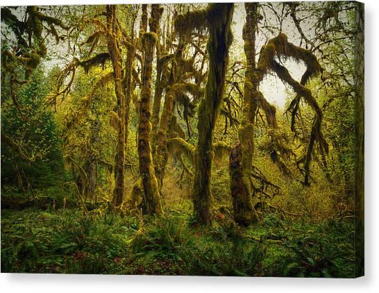 Maple Grove Canvas Print by Stuart Deacon