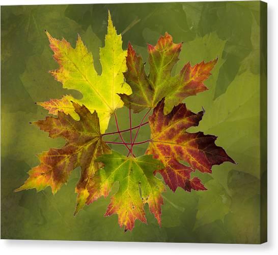 Maple Leaf Arrangement Canvas Print