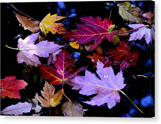 Maple Leaf Float Canvas Print