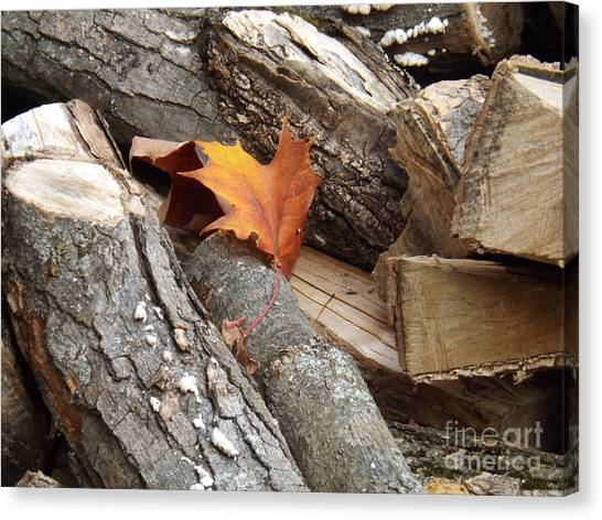 Maple Leaf In Wood Pile Canvas Print