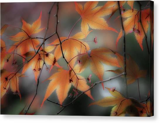 Maple Leaves 2 Canvas Print