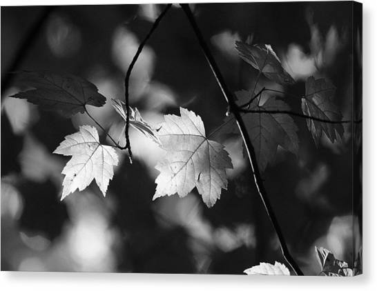 Maple Leaves In Black And White Canvas Print