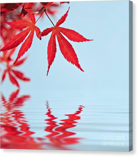Ace Canvas Print - Maple Reflection by Delphimages Photo Creations