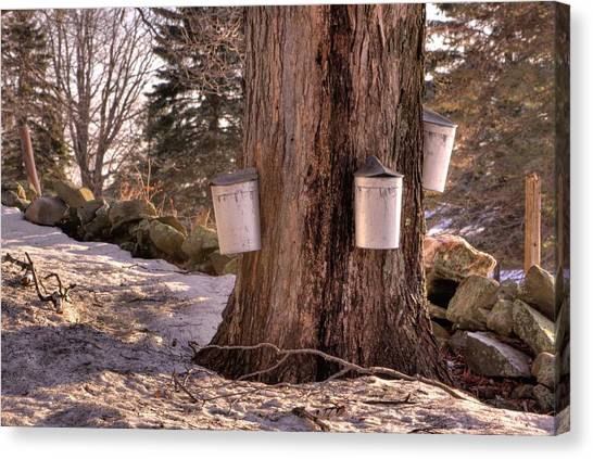 Maple Syrup Buckets Canvas Print
