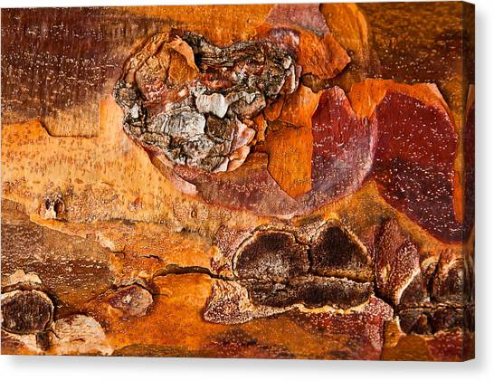 Maple Tree Bark Canvas Print