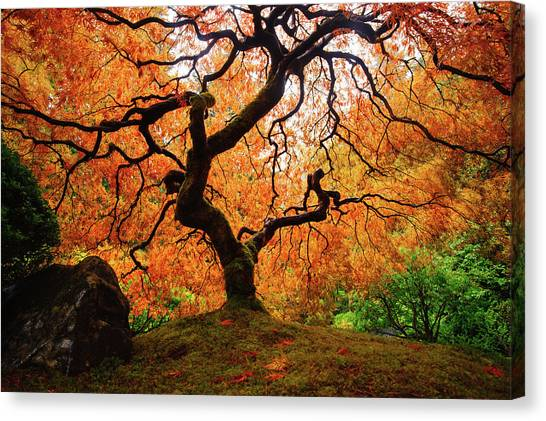 Yen Canvas Print - Maple Tree by Piriya Photography