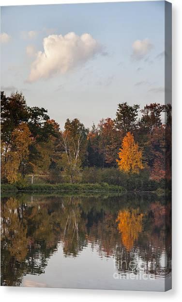 Maple Tree Reflection Canvas Print
