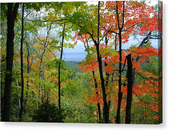 Maples Against Lake Superior - Tettegouche State Park Canvas Print