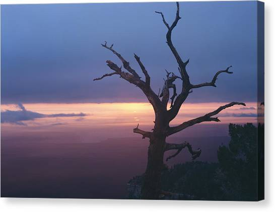 Marble View Snag Canvas Print