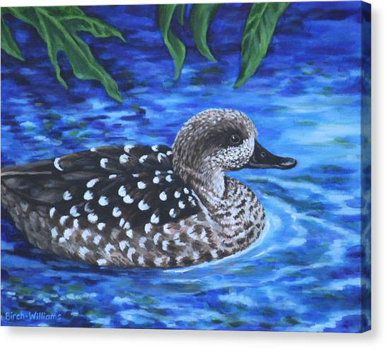 Marbled Teal Duck On The Water Canvas Print