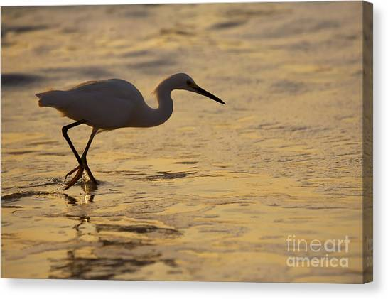 Snowy Egret Canvas Print - March Of The Egret by Mike  Dawson