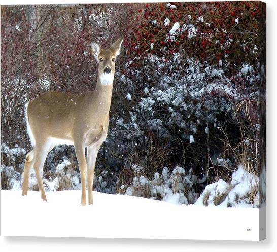 March Snow And A Doe Canvas Print