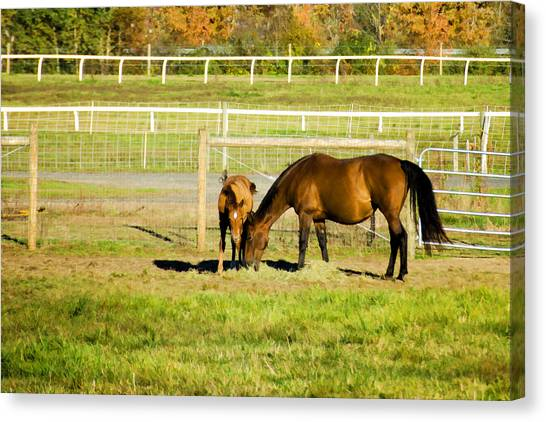 University Of Massachusetts Amherst Umass Amherst Canvas Print - Mare And Foal In Autumn by Donna Doherty