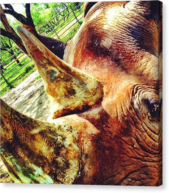 Rhinos Canvas Print - Margarita The Sweet Southern Black by Nick Lucey