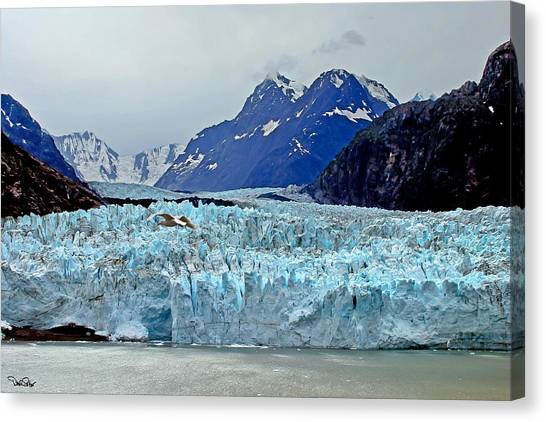 Margerie Glacier Canvas Print - Margerie Glacier by David Salter
