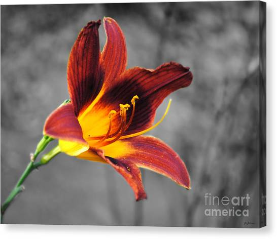 Margo's Lily Canvas Print