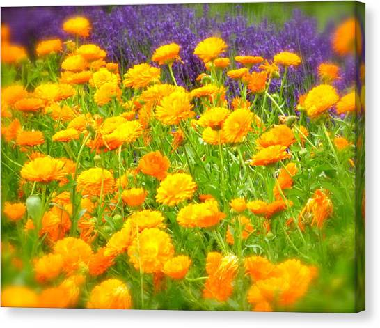 Marigolds And Lavender Canvas Print