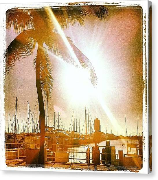 Grove Canvas Print - Marina Morning by Little Flower