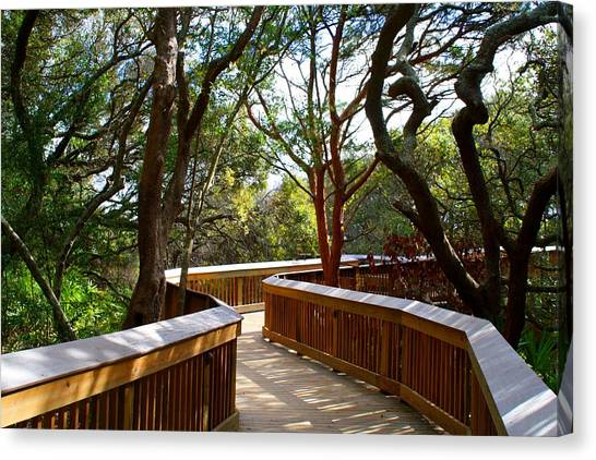 Maritime Forest Boardwalk Canvas Print