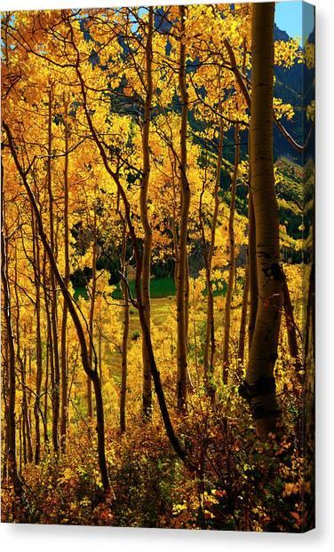 Maroon Lake Gold Canvas Print