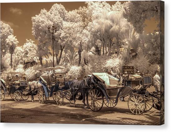 Marrakech Street Life - Horses Canvas Print