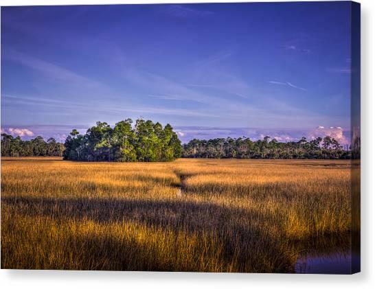 Marsh Grass Canvas Print - Marsh Hammock by Marvin Spates