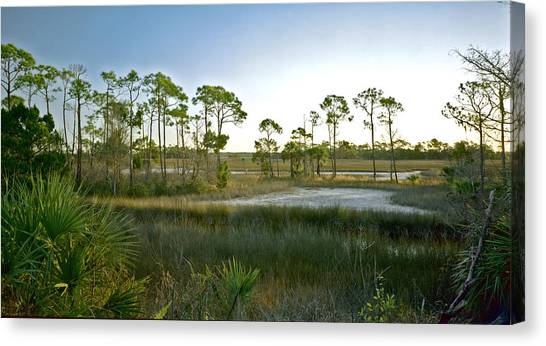 Marsh. St. Marks N.w.r. Canvas Print