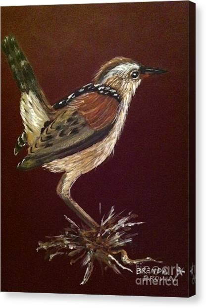 Marsh Wren Canvas Print