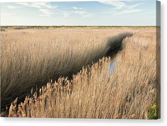 Marshland, Uk Canvas Print by Science Photo Library