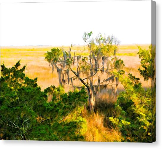 Marsh Cedar Tree And Moss Canvas Print