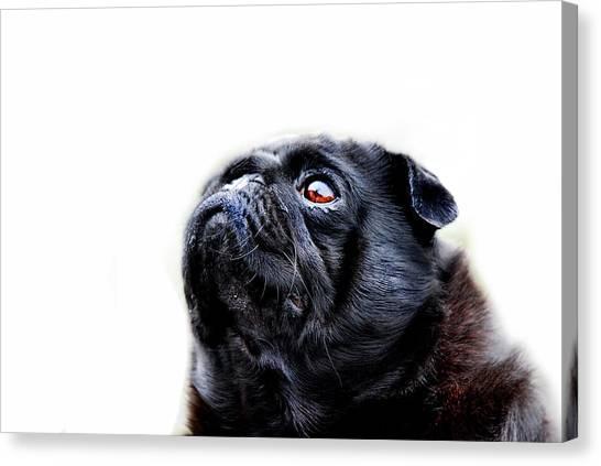 Pugs Canvas Print - Martha by Mark Rogan
