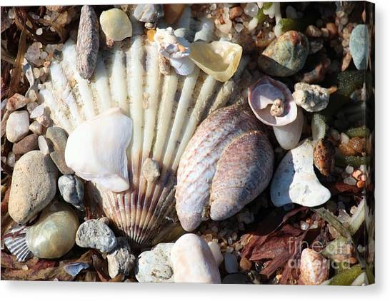 Marthas Vineyard Canvas Print - Shells Along The Seashore by Carol Groenen