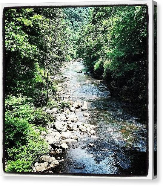 Trout Canvas Print - #maryland #savage #river #trout by Joshua Wysocki