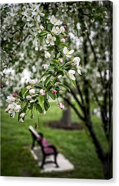 Mary's Tree And Bench Canvas Print