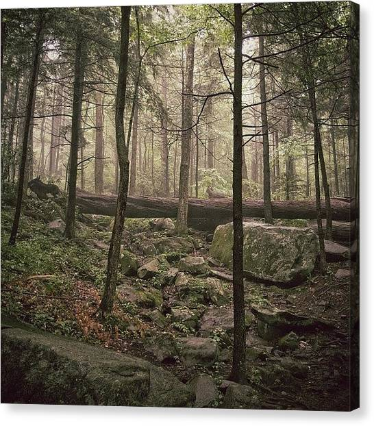 Foggy Forests Canvas Print - Massive Fallen Tree In Great Smoky by Mike S