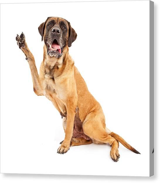 Mastiffs Canvas Print - Mastiff Dog With Paw In Peace Sign by Susan Schmitz