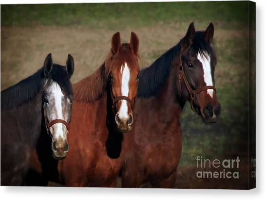 Canvas Print featuring the photograph Mates by Melinda Hughes-Berland